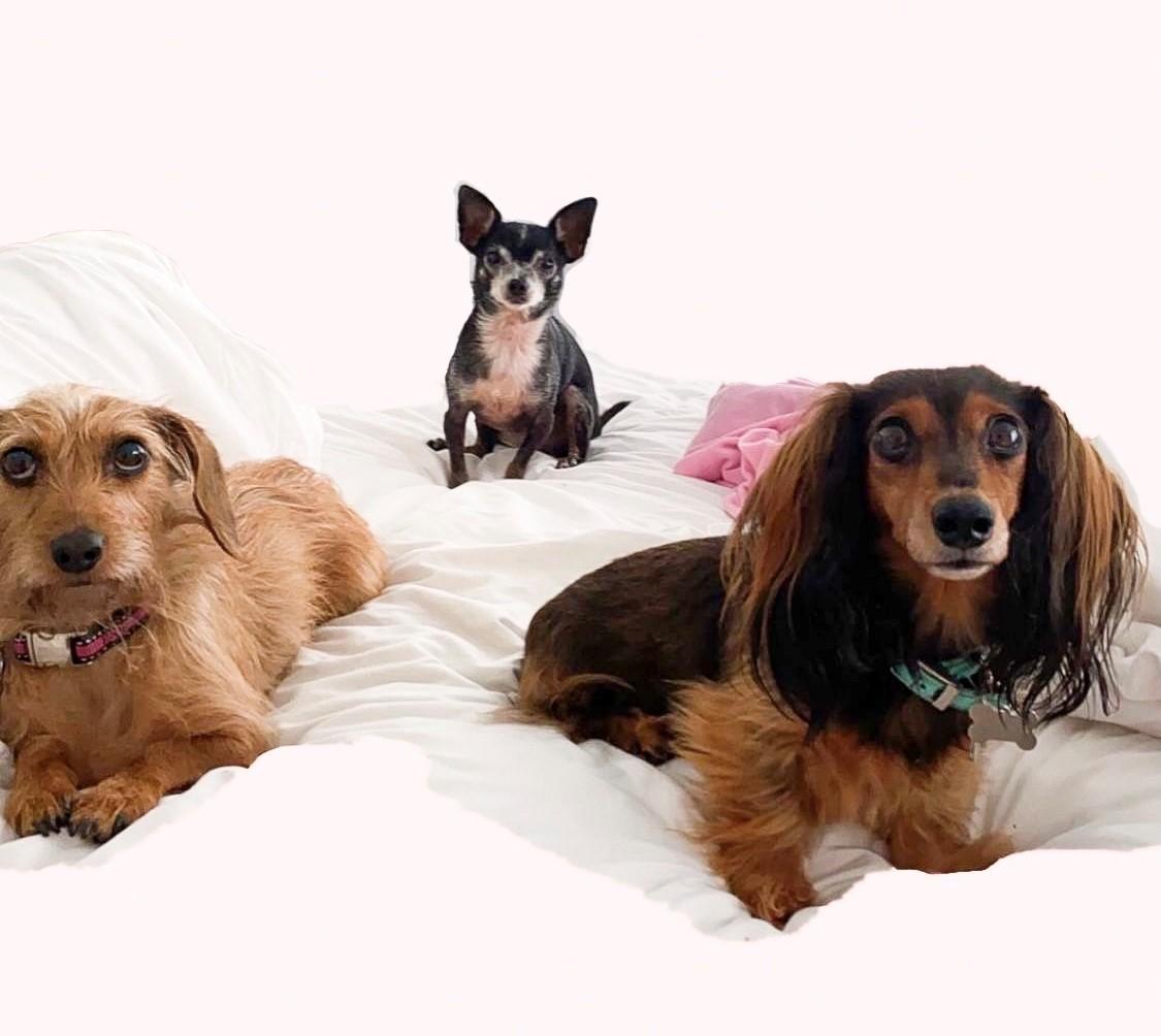 chelsea's dogs